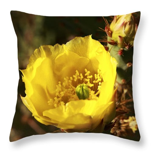 Cactus Throw Pillow featuring the photograph Prickly Pear Flower by Alan Vance Ley