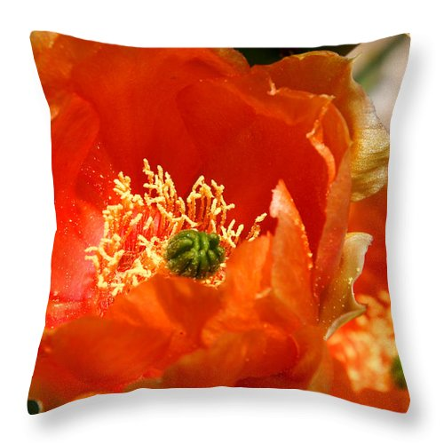 Cactus Throw Pillow featuring the photograph Prickly Pear In Bloom by Joe Kozlowski