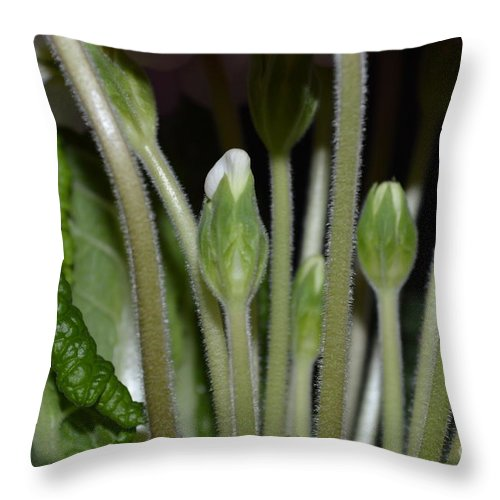 Spring Flower Throw Pillow featuring the photograph Primeroses Steam And Buds by Felicia Tica