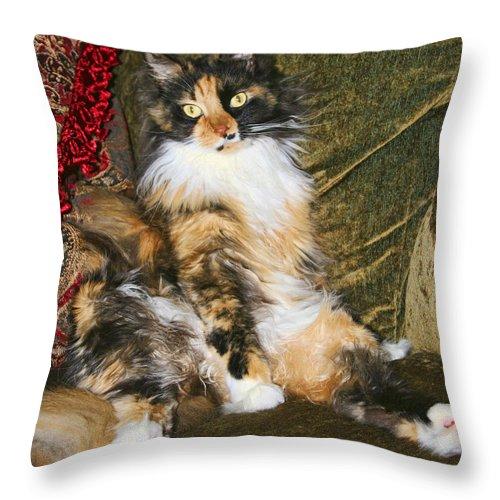 Cat Throw Pillow featuring the photograph Princess Miss Gizzie By Diana Sainz by Diana Raquel Sainz