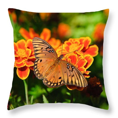 Butterfly Throw Pillow featuring the photograph Proboscis by Charles Dobbs