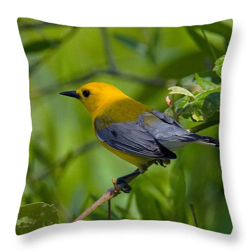 Nature Throw Pillow featuring the photograph Prothonotary Warble Dsb071 by Gerry Gantt