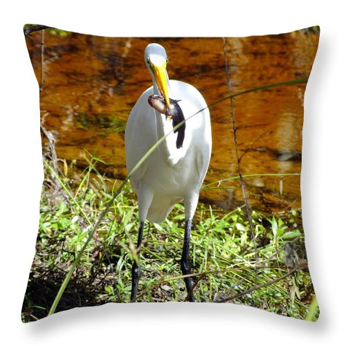 Nature Throw Pillow featuring the photograph Proud Of His Catch by Peggy King