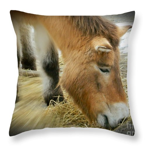 Przewalski's Horse Throw Pillow featuring the photograph Przewalski's Horse by Emmy Vickers