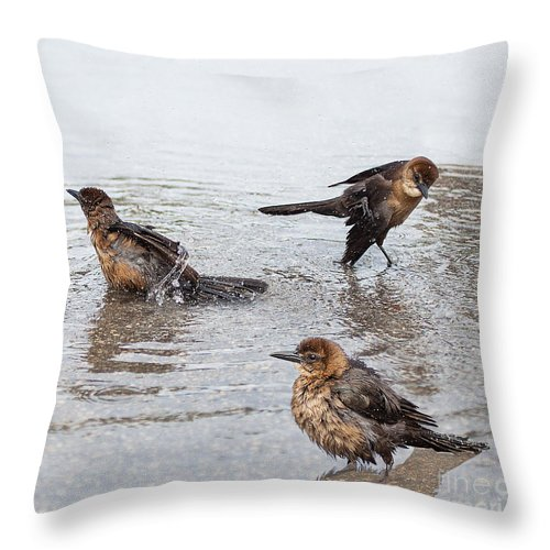 Crackle Throw Pillow featuring the photograph Public Bath by Barbara McMahon