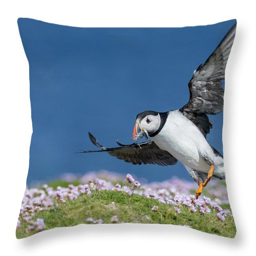 Puffin Throw Pillow featuring the photograph Puffin Flying Home by Jennifer LaBouff