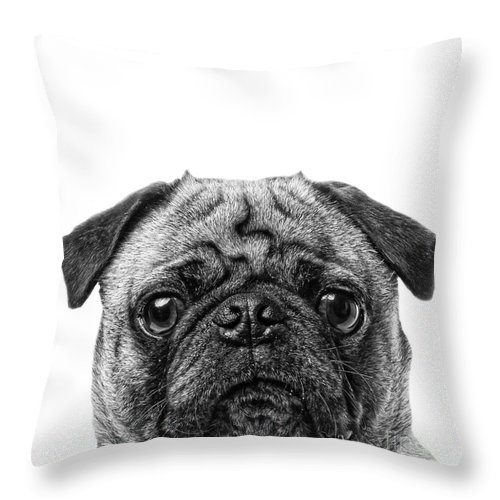 Graphic Throw Pillow featuring the photograph Pug Dog Square Format by Edward Fielding