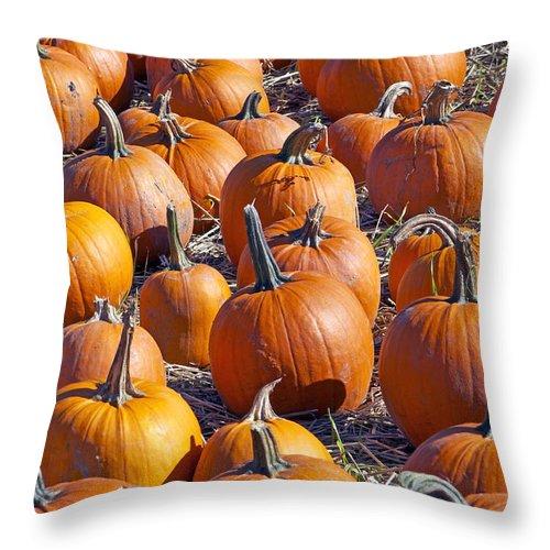 Pumpkin Throw Pillow featuring the photograph Pumpkin Harvest by Sharon Talson