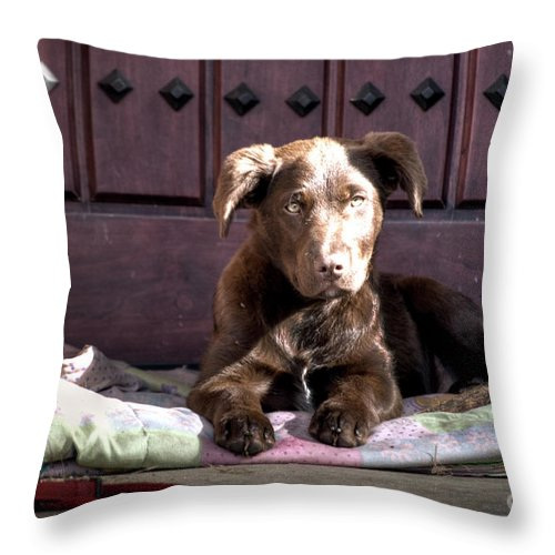 Amador Throw Pillow featuring the photograph Pup by Diego Re