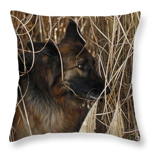 Pup Hiding In Tall Grass Throw Pillow featuring the photograph Pup Hiding In Tall Grass by Inspired Nature Photography Fine Art Photography