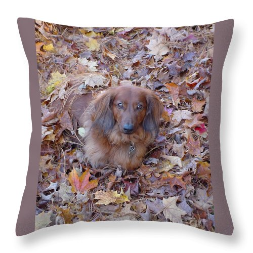 Dog Throw Pillow featuring the photograph Puppy by Nancie Johnson