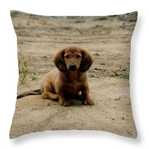 Puppy Throw Pillow featuring the photograph Puppy On The Beach by Nancie Johnson
