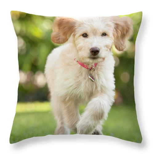 Pets Throw Pillow featuring the photograph Puppy Running Through The Grass by Chris Stein