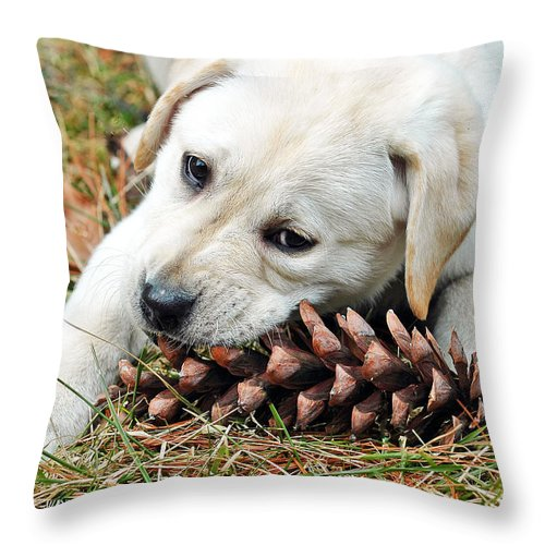 Animals Throw Pillow featuring the photograph Puppy With Pine Cone by Lisa Phillips