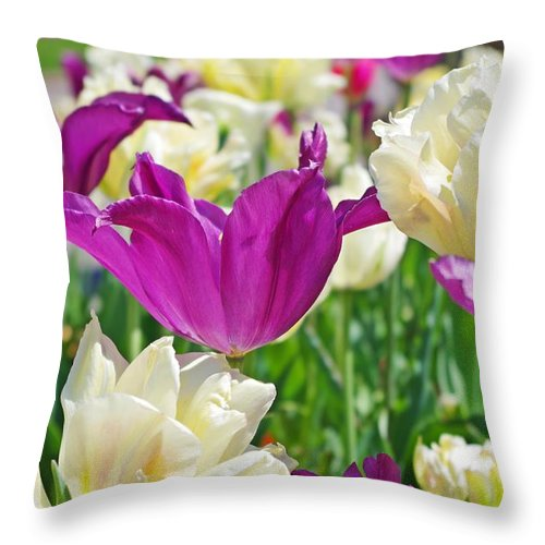 Purple Tulips Throw Pillow featuring the photograph Purple And White Tulips by Sharon Popek