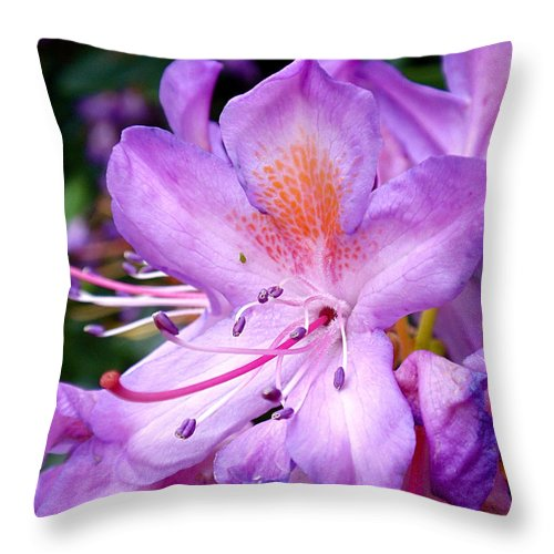 Azaleas Throw Pillow featuring the photograph Purple Azalea by Rona Black