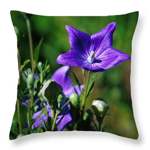 Growth; Wildflower; Beauty In Nature; Purple; No People; Vertical; Outdoors; Day; Close-up; Nature; Balloon Flower Throw Pillow featuring the photograph Purple Balloon Flower by Anonymous