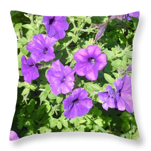 Purple Throw Pillow featuring the photograph Petunias Purple Club by Diane Palmer