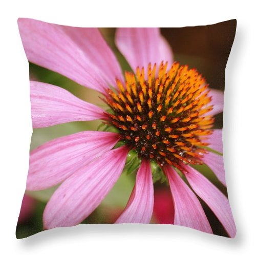 Echinacea Throw Pillow featuring the photograph Purple Coneflower by Donna Walsh