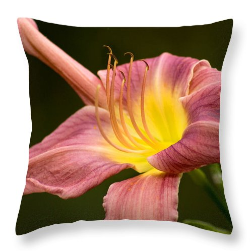 Flower Throw Pillow featuring the photograph Purple Daylily by Benjamin Reed
