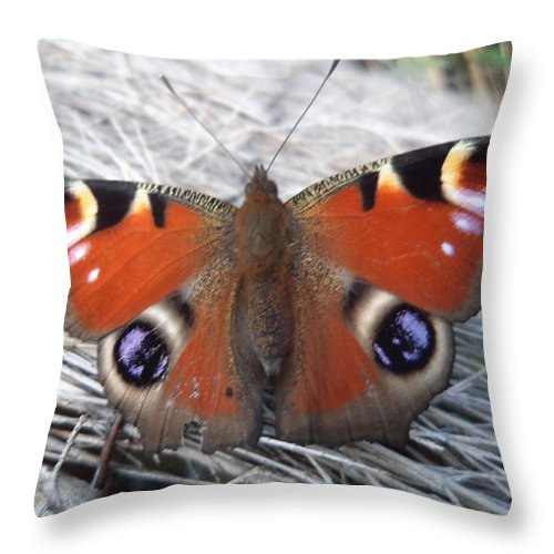 Butterfly Throw Pillow featuring the photograph Purple Emperor by Krystyna Spink