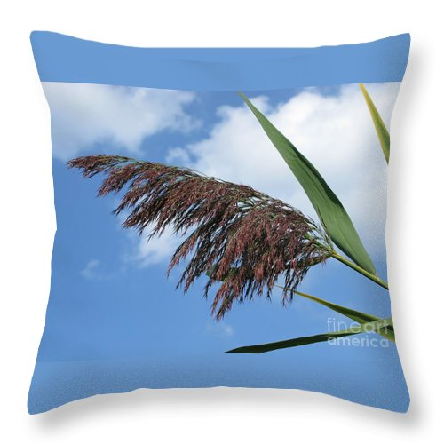 \reed Throw Pillow featuring the photograph Purple Fringe by Ann Horn