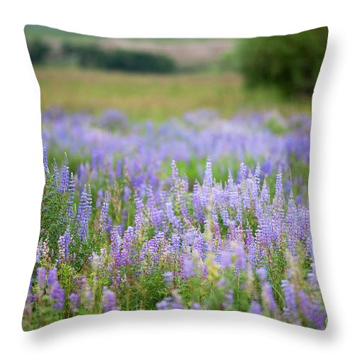 Purple Wildflowers Photograph; Purple Wildflowers Canvas Print; Wild Lupine Photograph Throw Pillow featuring the photograph Purple Haze by Jim Garrison