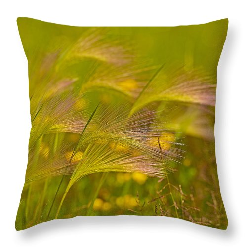 Foxtail Throw Pillow featuring the photograph Purple Haze by Joshua McCullough