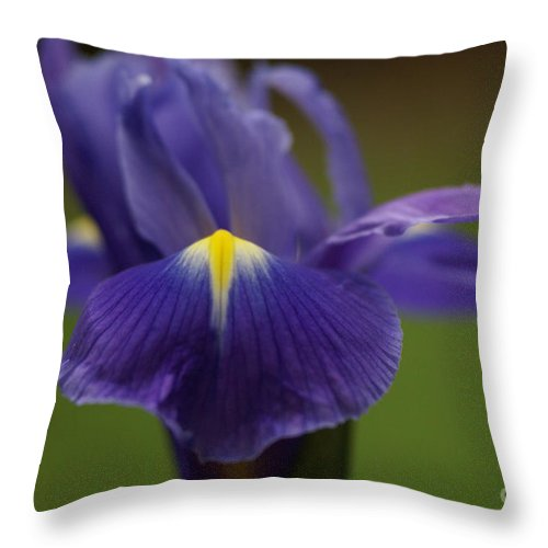 Purple Throw Pillow featuring the photograph Purple Iris 6 by Carol Lynch