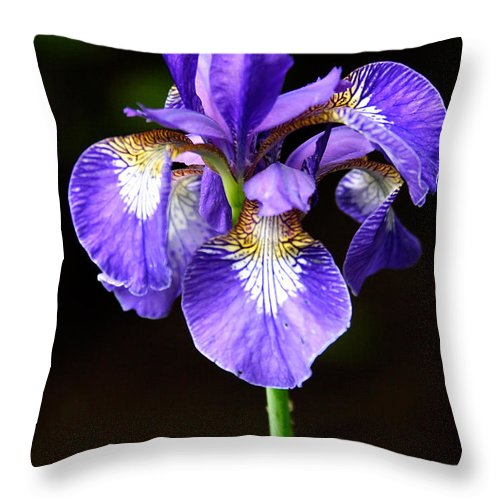3scape Throw Pillow featuring the photograph Purple Iris by Adam Romanowicz