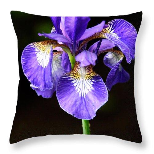 3scape Photos Throw Pillow featuring the photograph Purple Iris by Adam Romanowicz