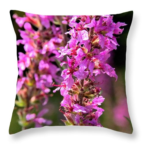 Purple Loosestrife Throw Pillow featuring the photograph Purple Loosestrife Tall by Valerie Kirkwood