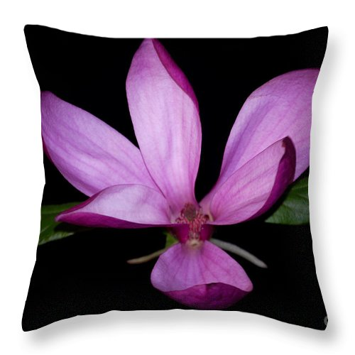 Purple Throw Pillow featuring the photograph Purple Magnolia by Nancy Bradley