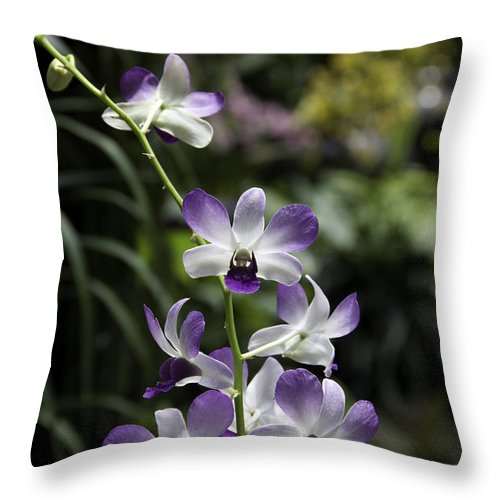 Asia Throw Pillow featuring the photograph Purple Orchid Flower Inside The National Orchid Garden In Singapore by Ashish Agarwal
