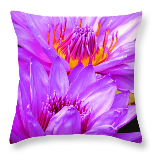 Water Lily Throw Pillow featuring the photograph Purple Perfection by Putterhug Studio