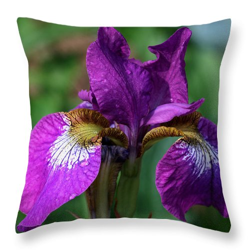 Iris Throw Pillow featuring the photograph Purple Pleaser by Doug Norkum