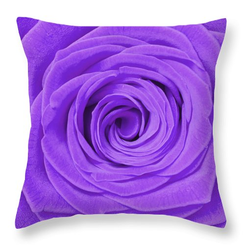 Beauty Throw Pillow featuring the photograph Purple Rose by Semmick Photo