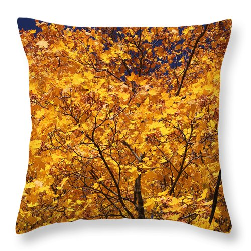 Maple Throw Pillow featuring the photograph Purple Sky by Mary Bedy