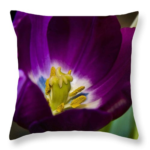 Floral Throw Pillow featuring the photograph Purple Tulip by Aza Johnson