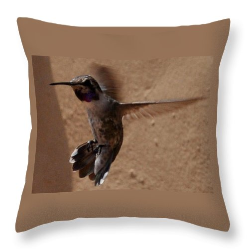 Hummingbird Throw Pillow featuring the photograph Put On The Brakes by Jay Milo