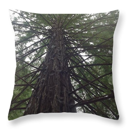 Redwood Tree Throw Pillow featuring the photograph Puzzle by Manoj Ketkar