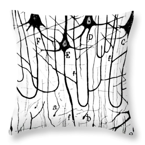 Ramon Y Cajal Throw Pillow featuring the photograph Pyramidal Cells Illustrated By Cajal by Science Source