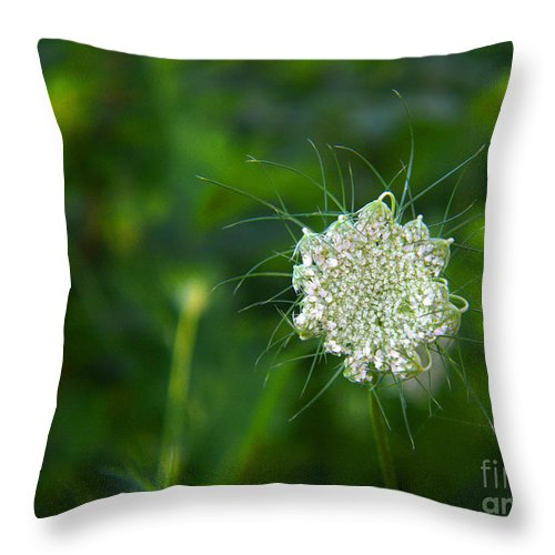 Flower Throw Pillow featuring the photograph Queen Anne S Lace Single by Tina M Wenger