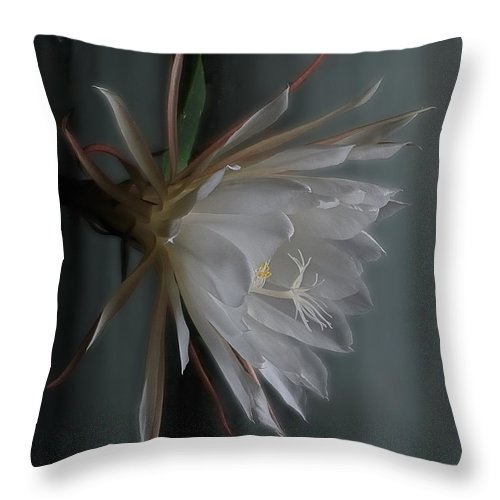 Floral Throw Pillow featuring the photograph Queen Of The Night by Susan Capuano