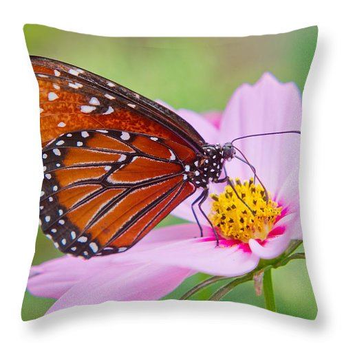 Queen Butterfly Throw Pillow featuring the photograph Queen On Cosmos by Lindley Johnson