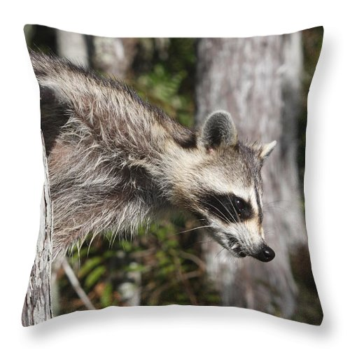 Raccoon Throw Pillow featuring the photograph Raccoon by Christiane Schulze Art And Photography