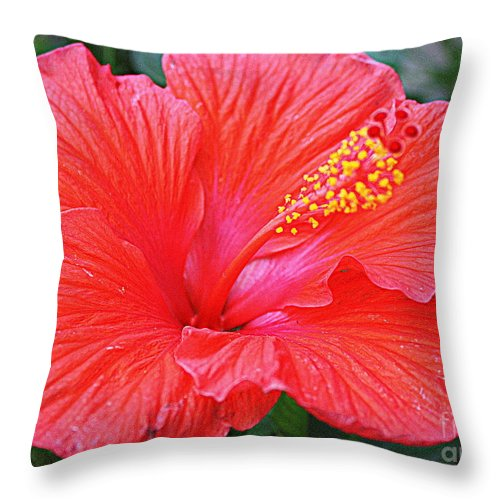 Radiant In Red - Red Hibiscus - Tropical Flowers - Nature - Hibiscus Throw Pillow featuring the photograph Radiant In Red by Dora Sofia Caputo Photographic Design and Fine Art