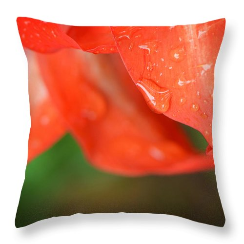 Rain Throw Pillow featuring the photograph Rain Dance - Red Flower Photography By Sharon Cummings by Sharon Cummings