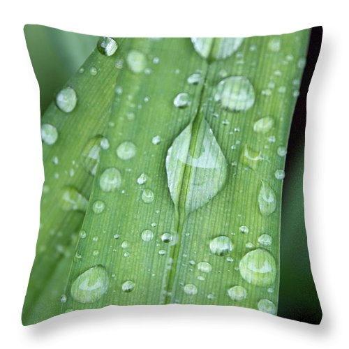 Rain Throw Pillow featuring the photograph Rain Drops by Laurie Pelletier