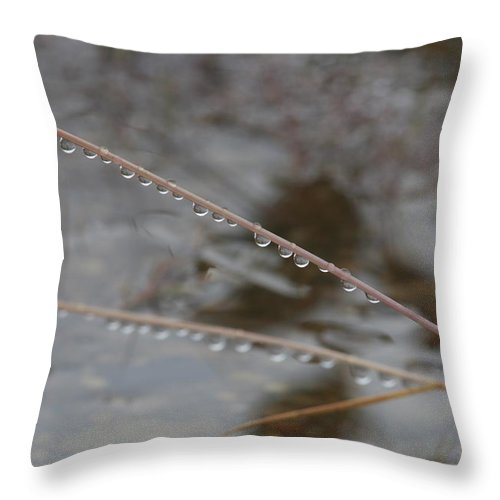 Beautiful Throw Pillow featuring the photograph Rain Drops On A Grass Culm by Ulrich Kunst And Bettina Scheidulin